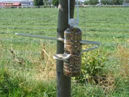 Image result for easy to make bird feeders