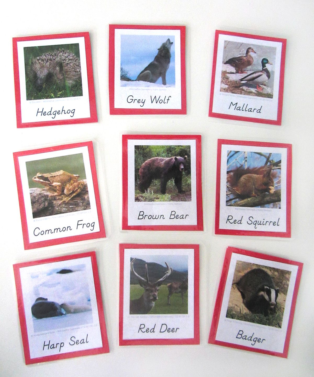 Animals Of Europe For The Montessori Wall Map Amp Quietbook
