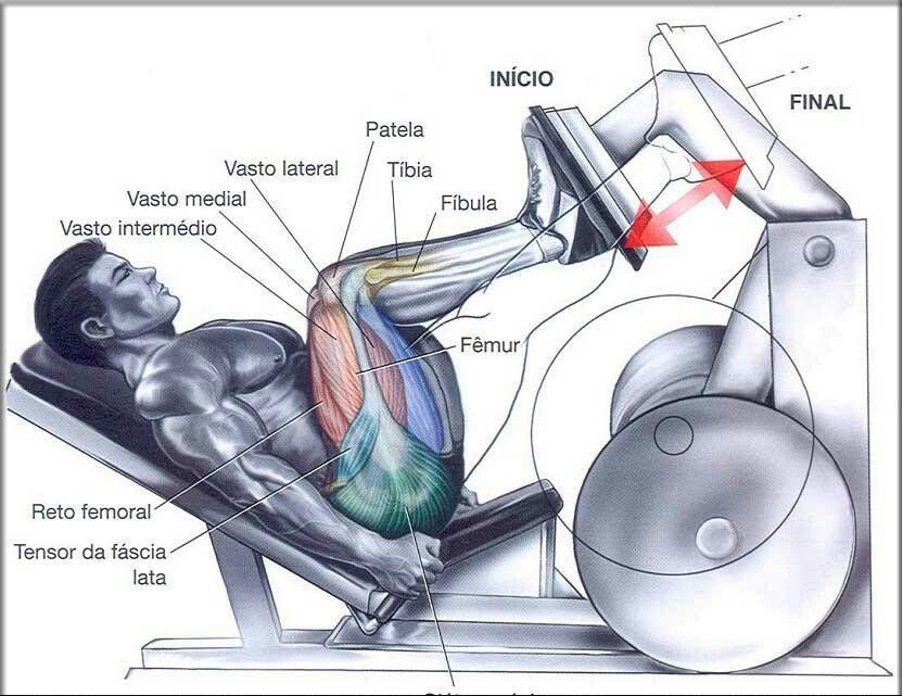 Pratica De Exercicio E Musculos Trabalhados Com Imagens Leg