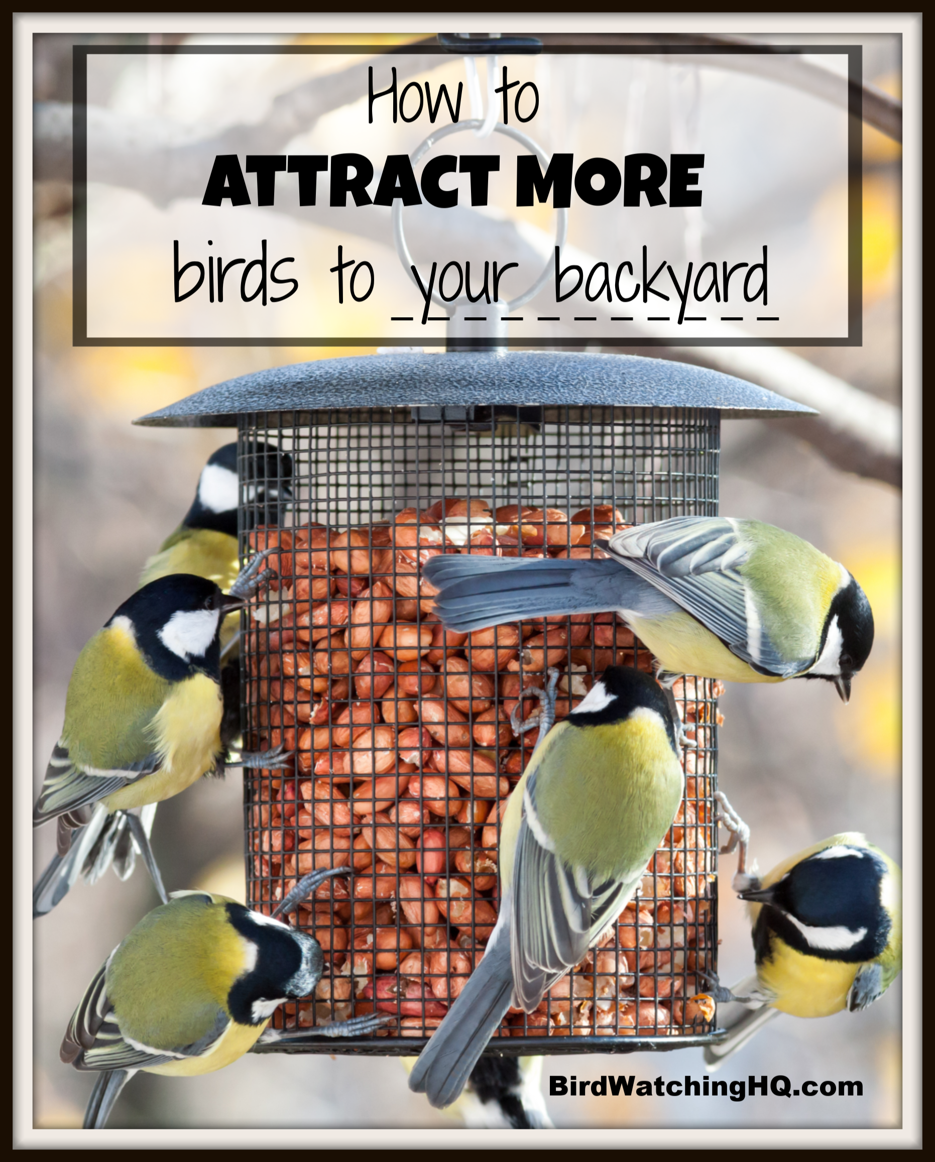 Attract Birds With These SIMPLE Strategies 2020 - Bird ...