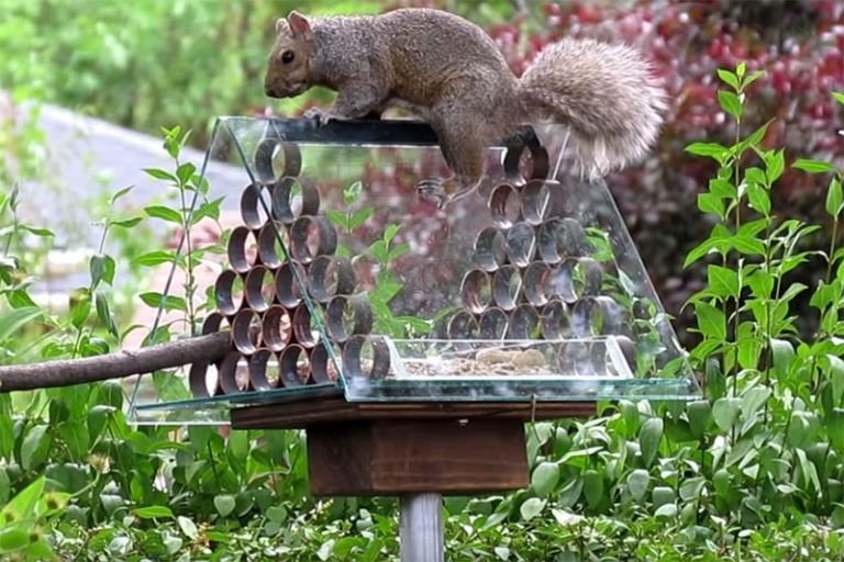 how to squirrel proof a bird feeder with pvc pipe