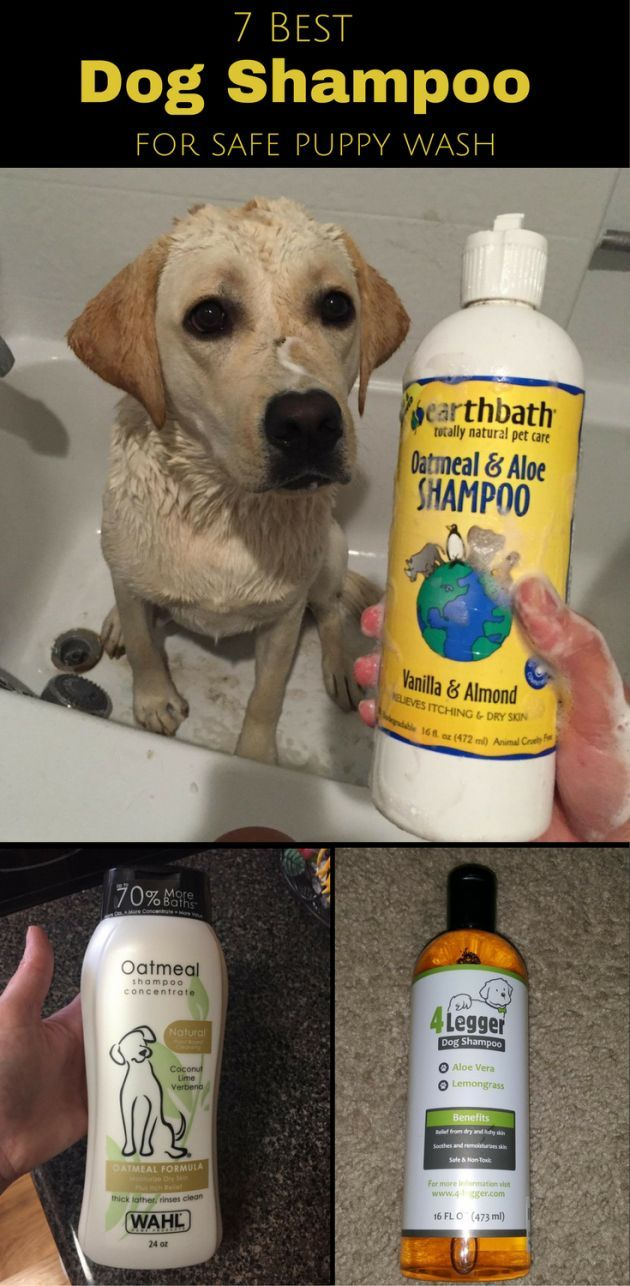Best Dog Shampoo Tap The Link Now Find That Perfect Gift Dog Shampoo Best Dog Shampoo Puppy Wash