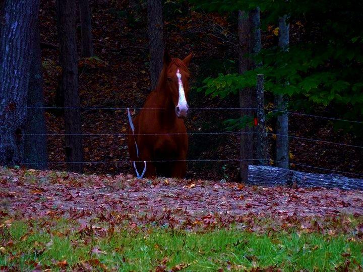 Belle, looking for her dinner. Fanrock, WV