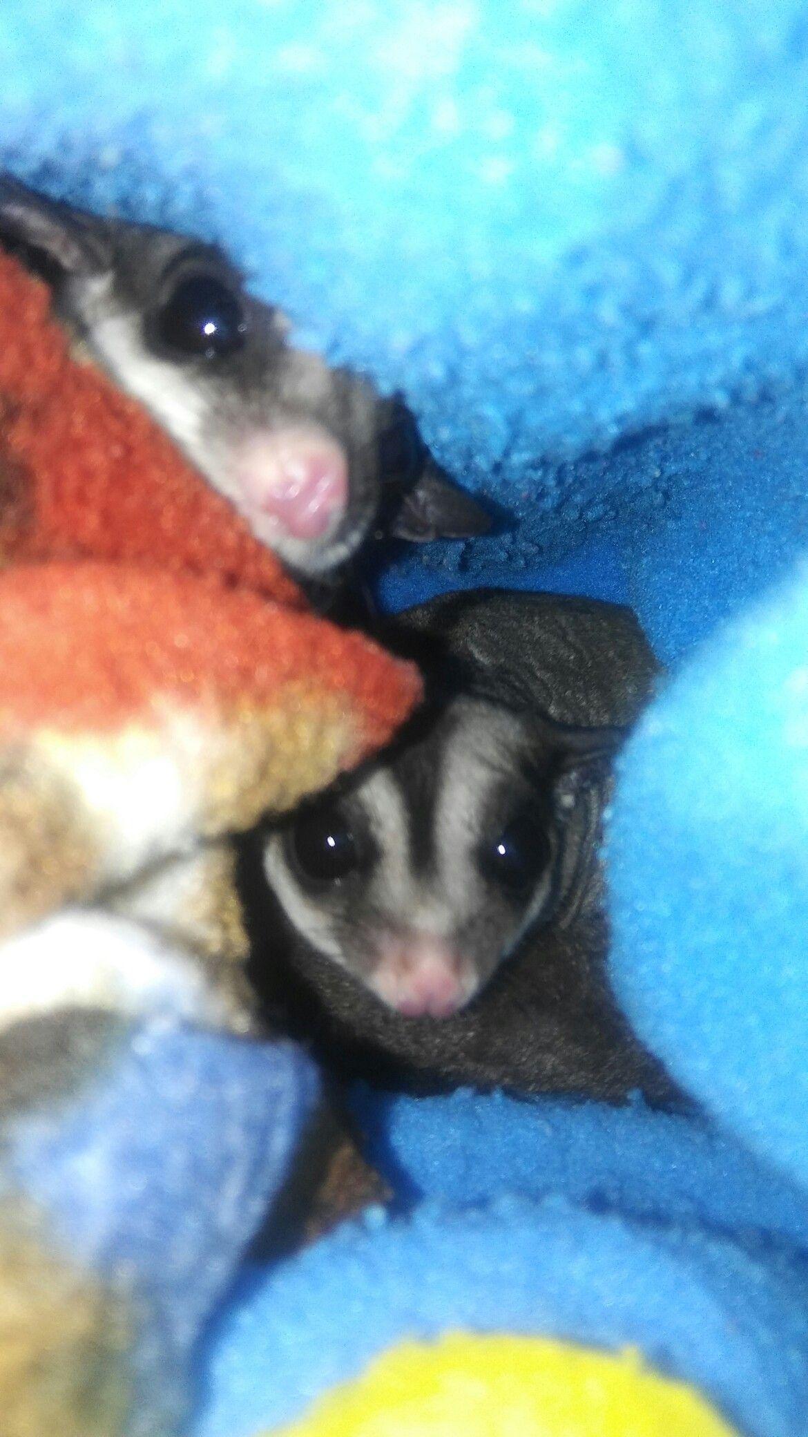 My fat BABIES Gigi & Gizmo