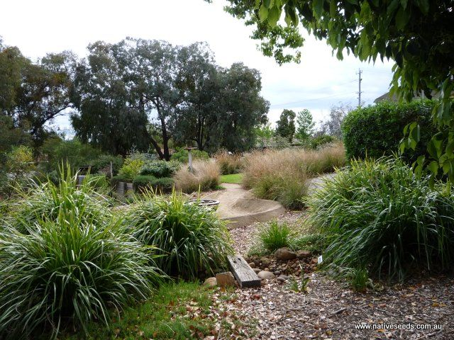 Australian native grasses for landscaping Native Grasses For