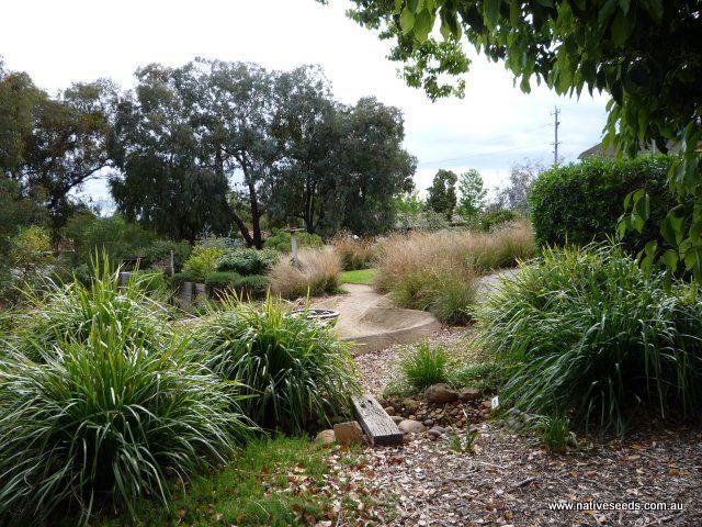 Australian native grasses for landscaping backyard for Australian native garden design ideas