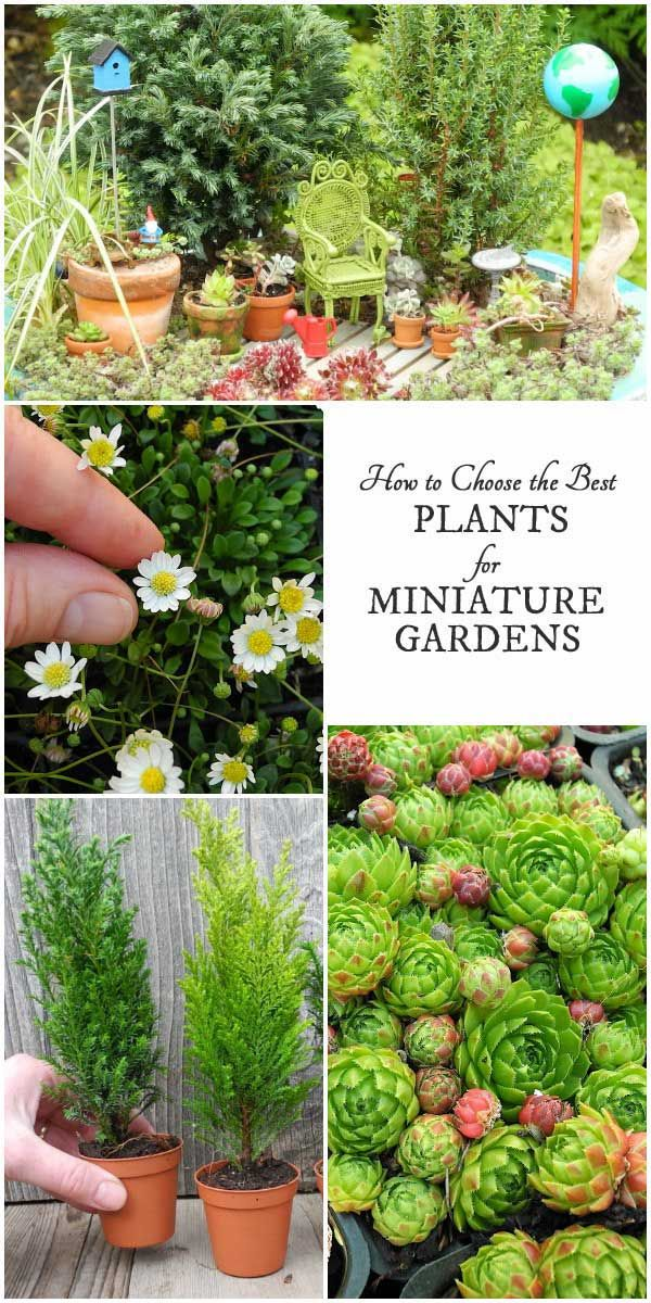 3916d31dd7ab95489de86a32746de7dd - Best Plants For Miniature Fairy Gardens