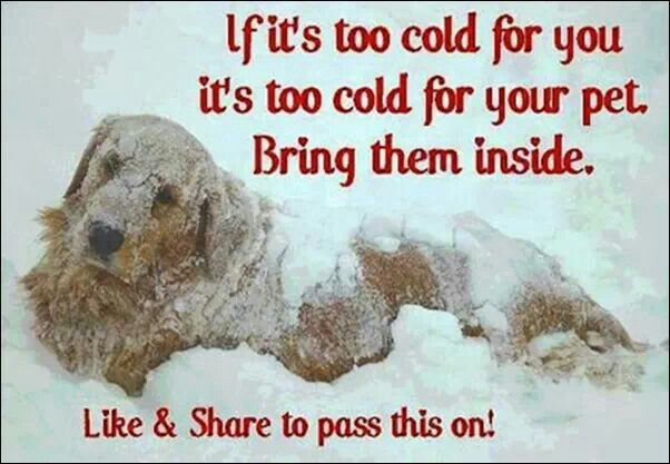 Fur can only do so much ... Let's think about it folks.
