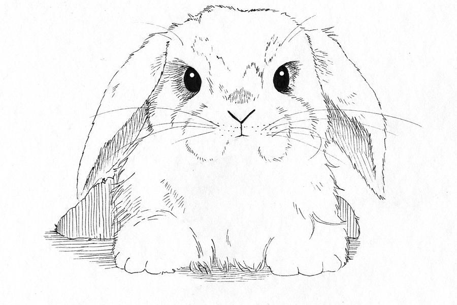 Bunny Rabbit Coloring Pages Lop-eared Bunny Drawing by Callan - best of bunny rabbit coloring pages print