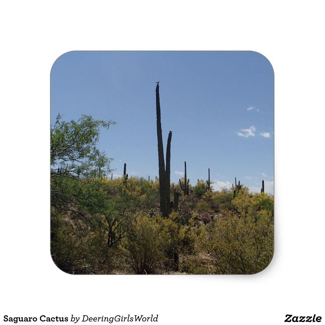 Saguaro Cactus Square Sticker