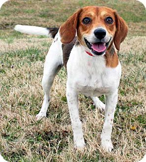 Pin By Michelle On Adoptable Dogs Dogs Beagle Beagle Mix