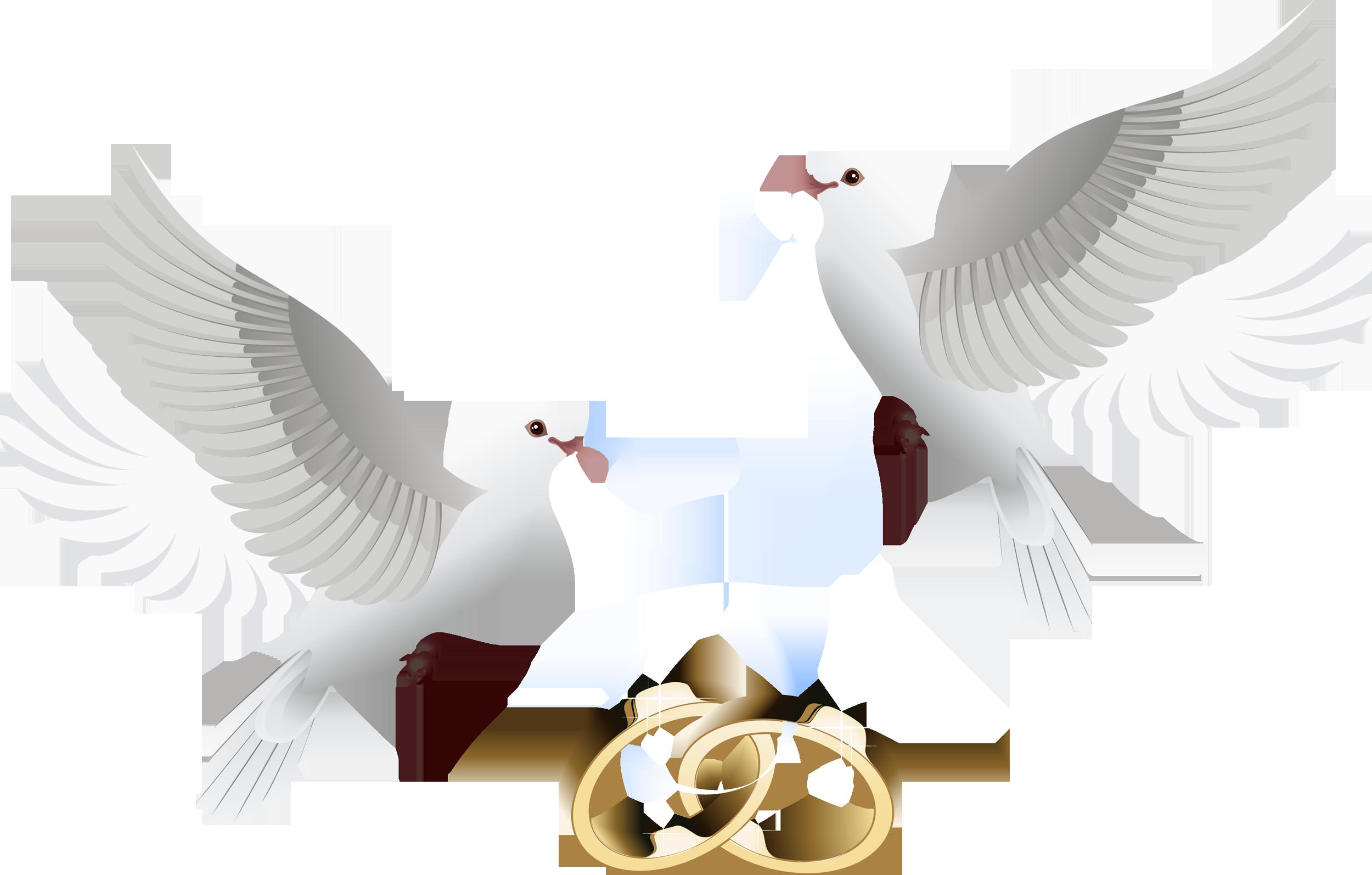 0_16a983_2c0f79aa_orig.png (2500×1594) Wedding doves