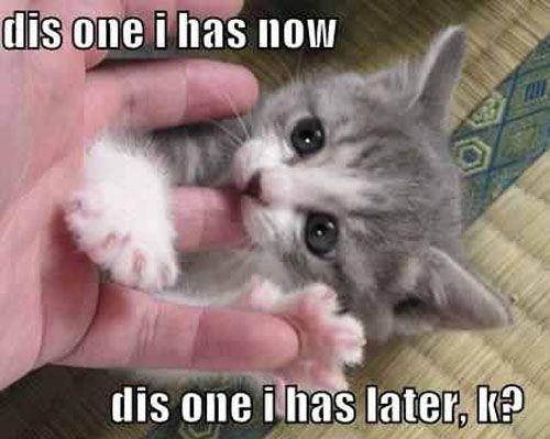 Kitten nibbles...