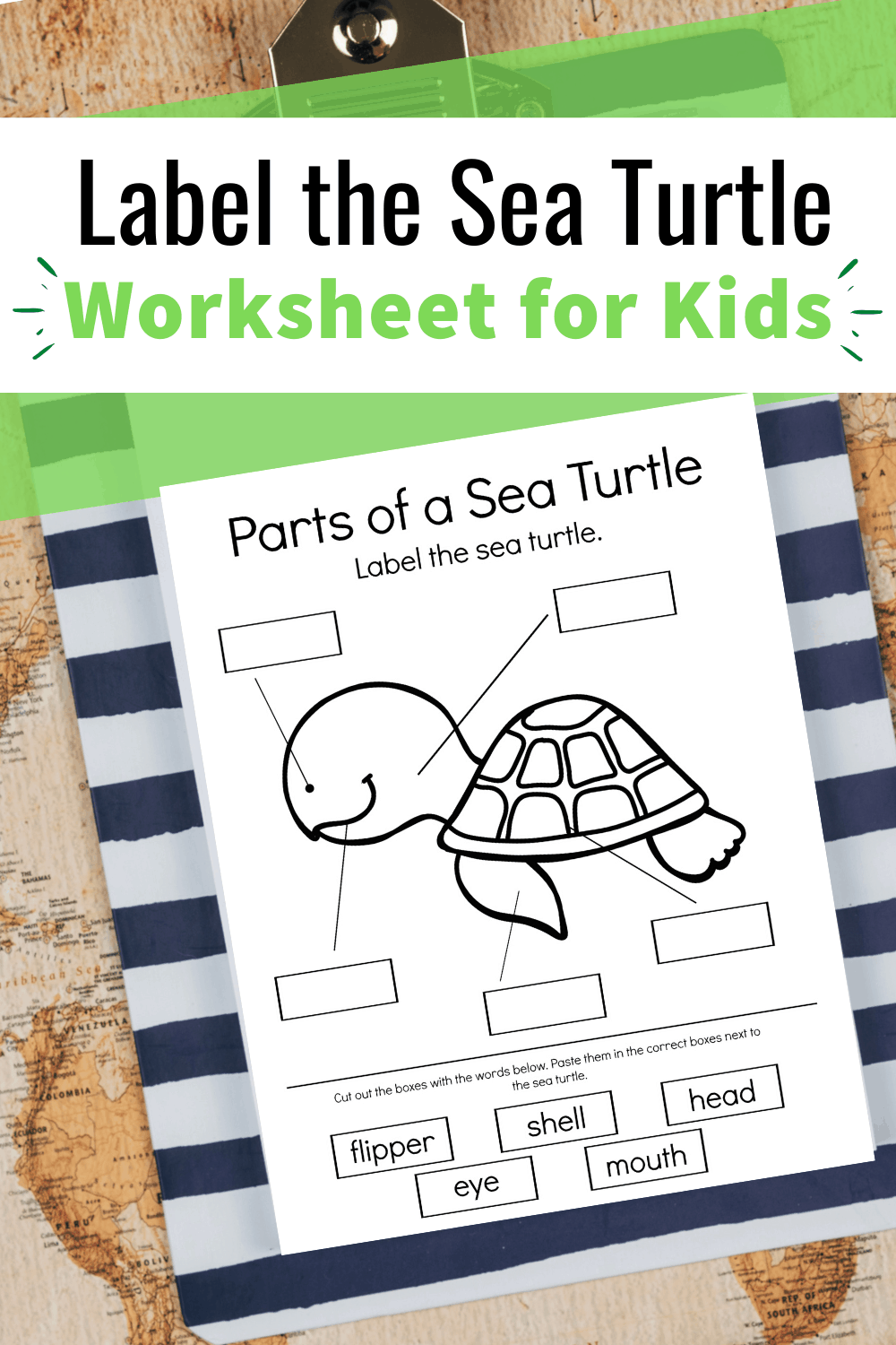 A Wide Variety Of Life Cycle Activities For Preschool Sea Turtle Lesson Plans Ocean Theme Preschool Ocean Lesson Plans [ 1500 x 1000 Pixel ]