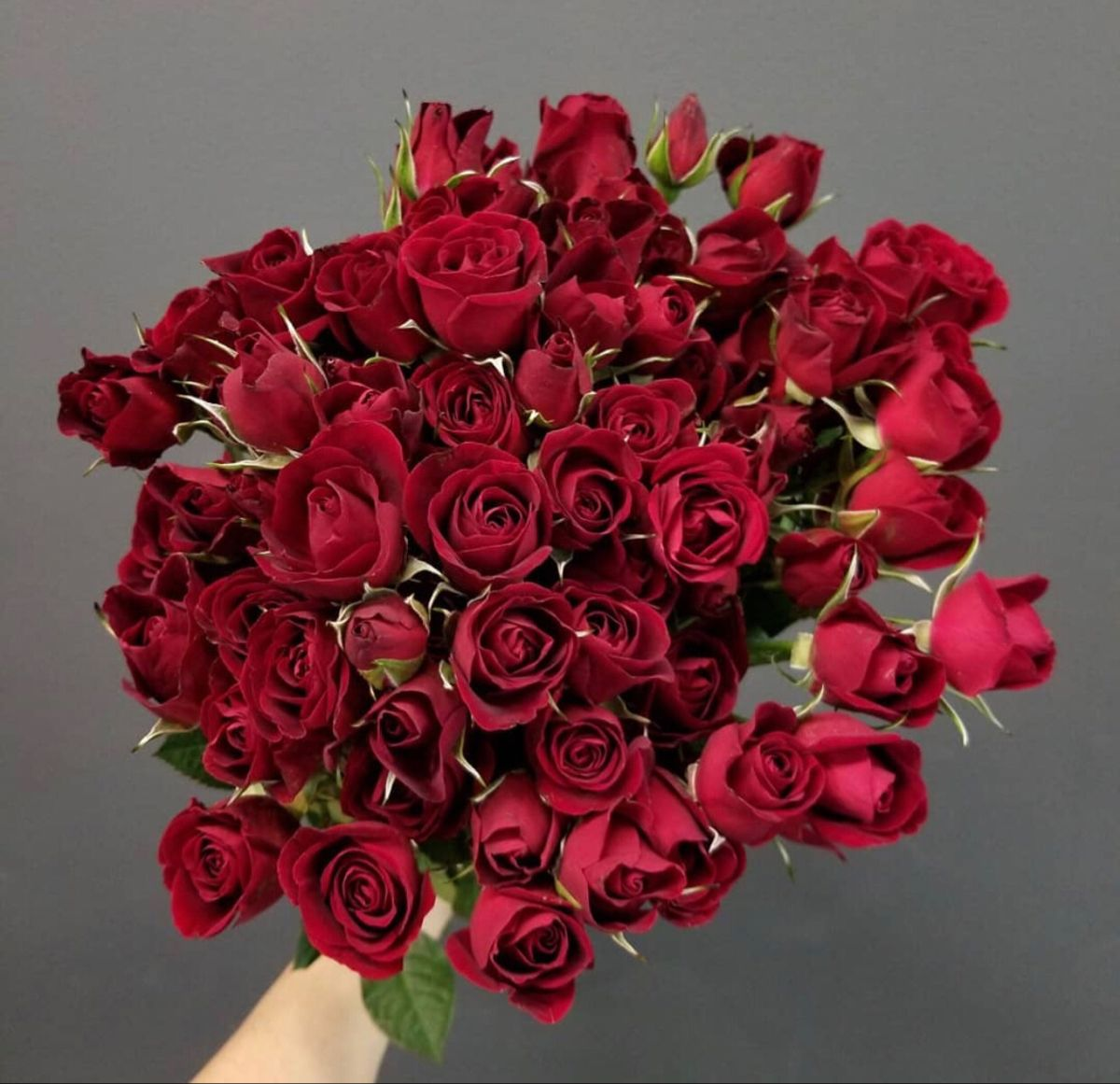 Red Spray Roses In 2020 Spray Roses Wholesale Flowers Wholesale Roses