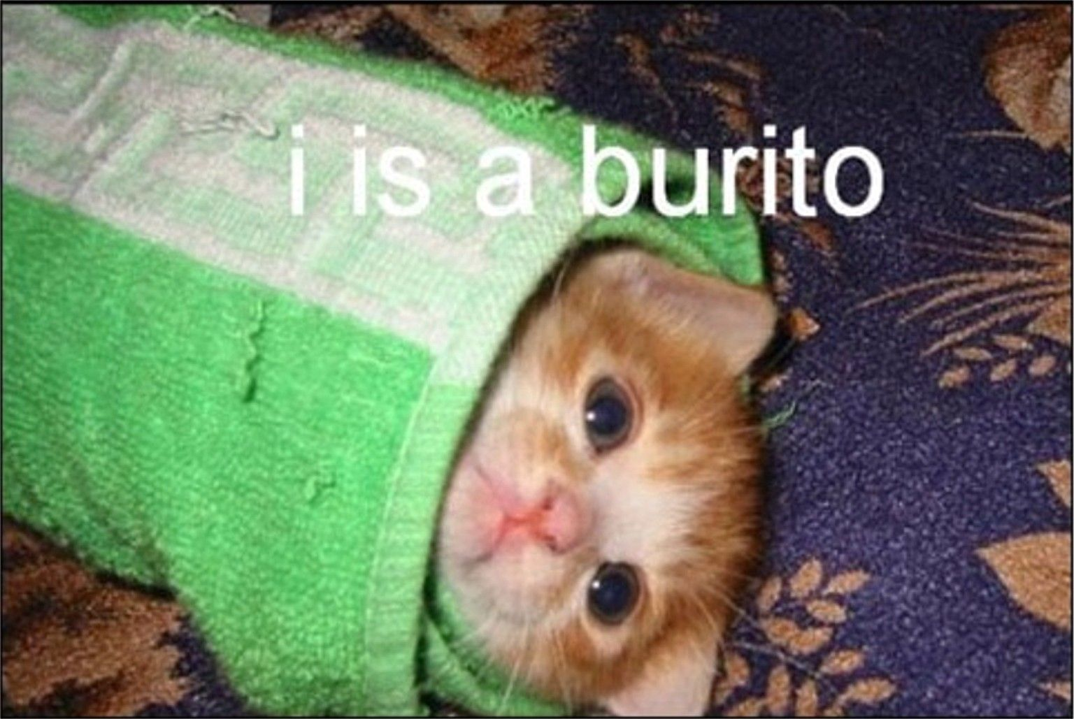 I M A Burrito Funny Cat Photos Funny Cat Pictures Funny Cute