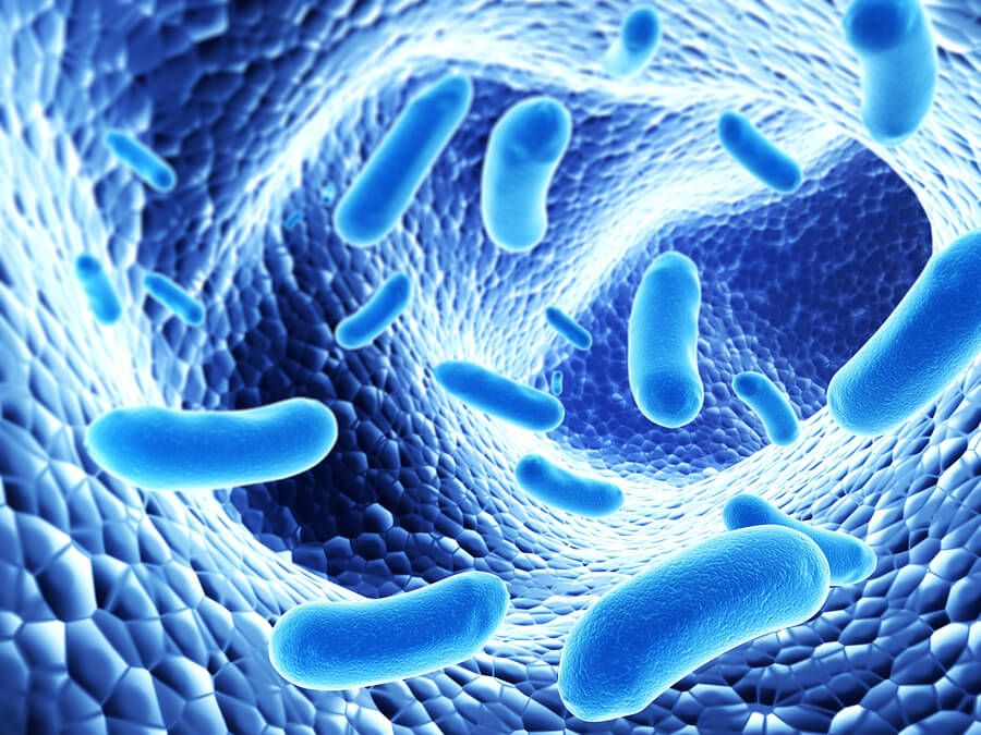 bacteria in the body