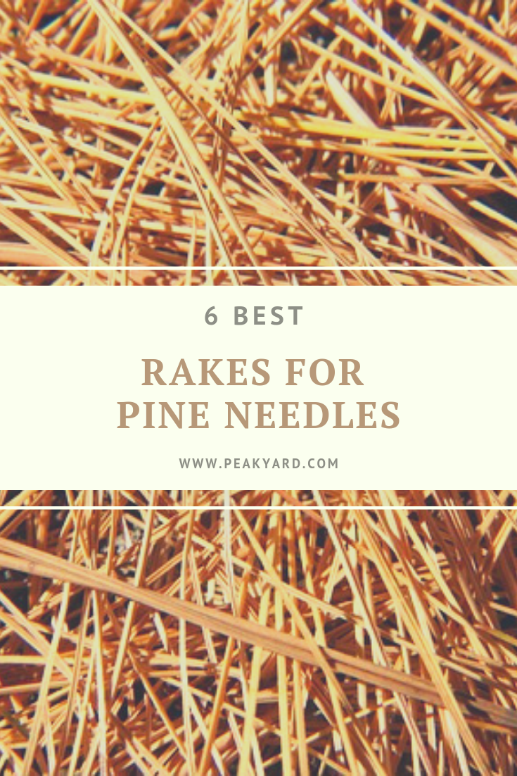 Best Rakes For Pine Needles Pine Needles Pine Lawn Care
