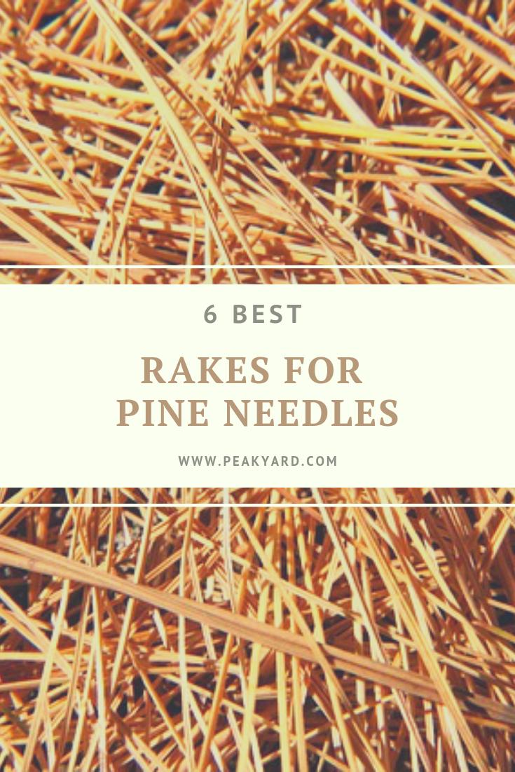 Best Rakes For Pine Needles Pine Needles Pine Lawn Care