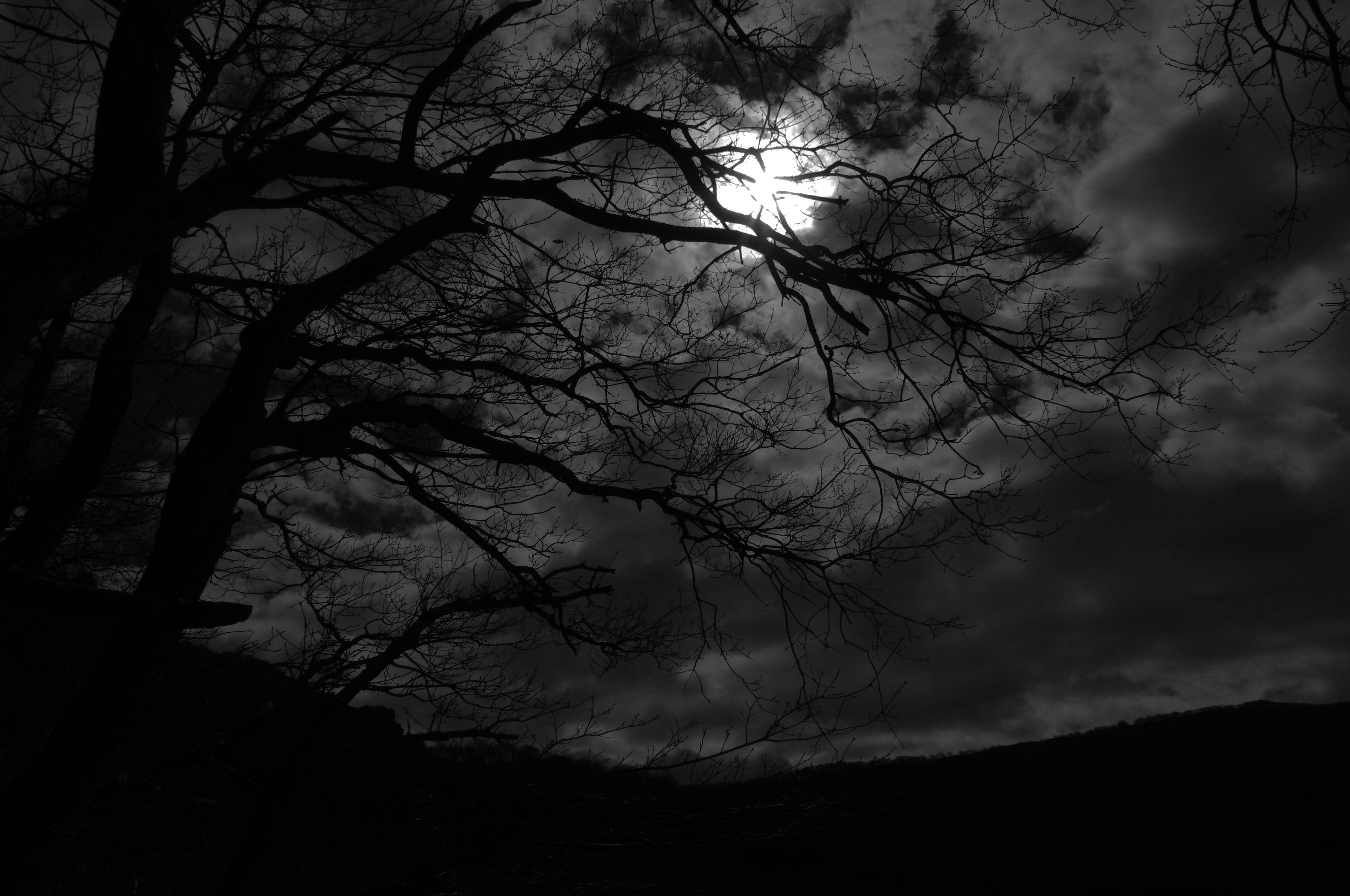 dark night by rad wulf on deviantart alone in 2018 pinterest