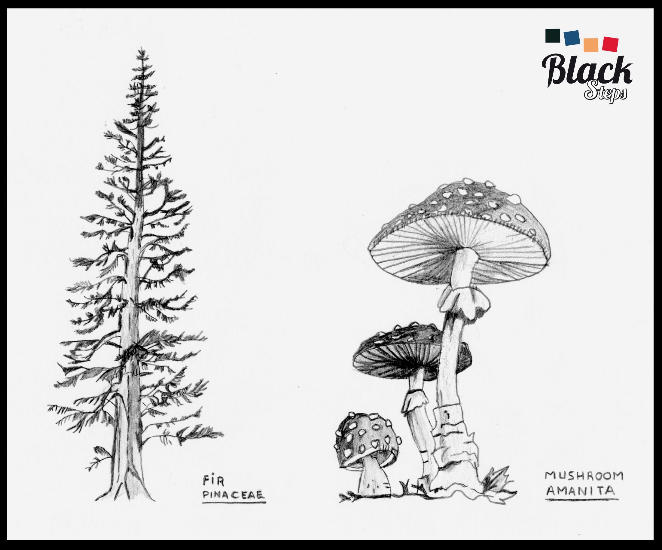Pino Y Mashroom Dibujo Con Lapiz Art Home Decor Home Decor Decals