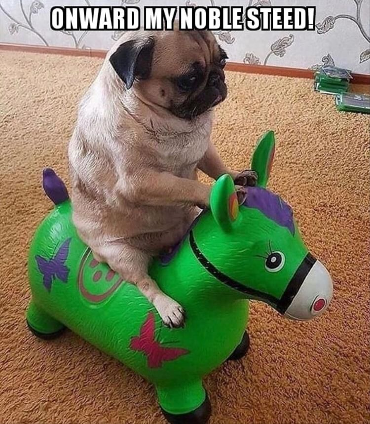 20 Funny Pug Pictures You Need To Save To Your Camera Roll Now
