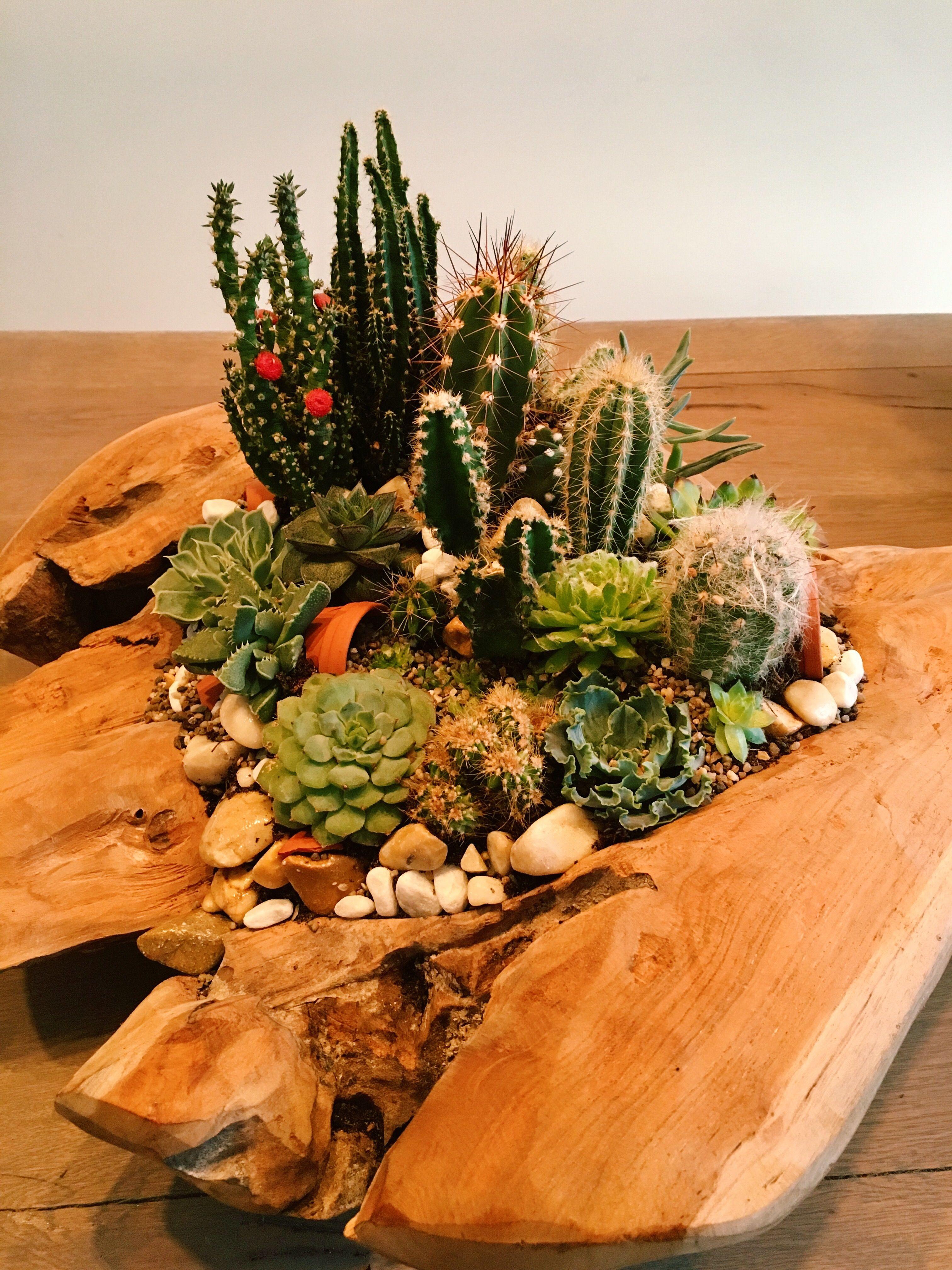 Potgrond Voor Cactussen.Cactus Oasis Prachtige Houten Bak Gevuld Met Succulenten En Cactus