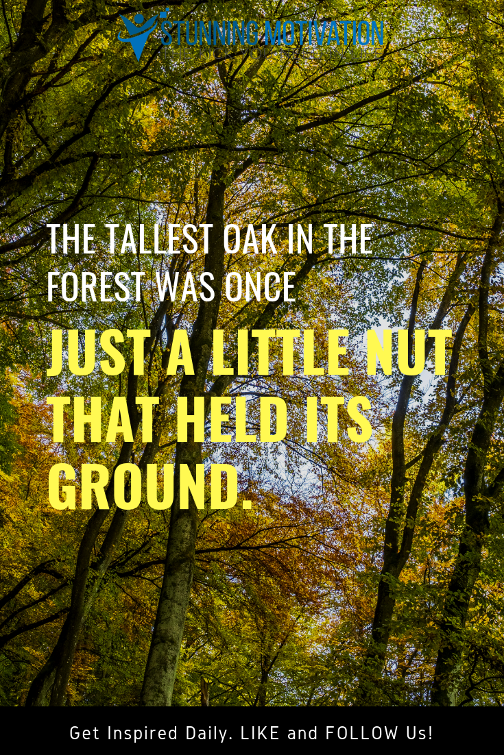The Tallest Oak In The Forest Was Once Just A Little Nut That Held Its Ground Inspirational Quotes Motivation Things To Think About