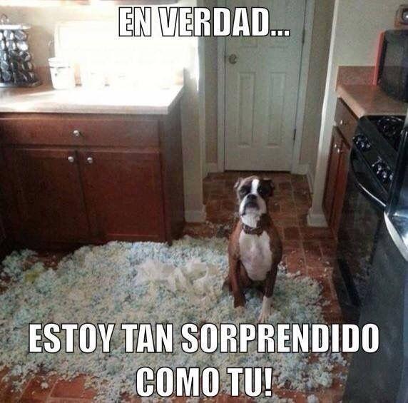 Pin De Juan Angeles En Pets Fotos Divertidas De Perros Cachorros Adorables Perros Enamorados