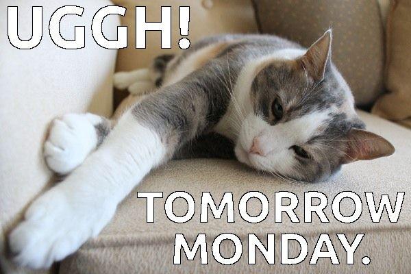 Monday Again Funny Animal Memes Cats Cat Memes