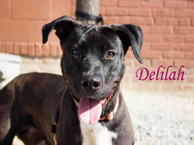 Adopt Mason On Adoptable Dachshund Dog Pet Adoption Dachshund Love