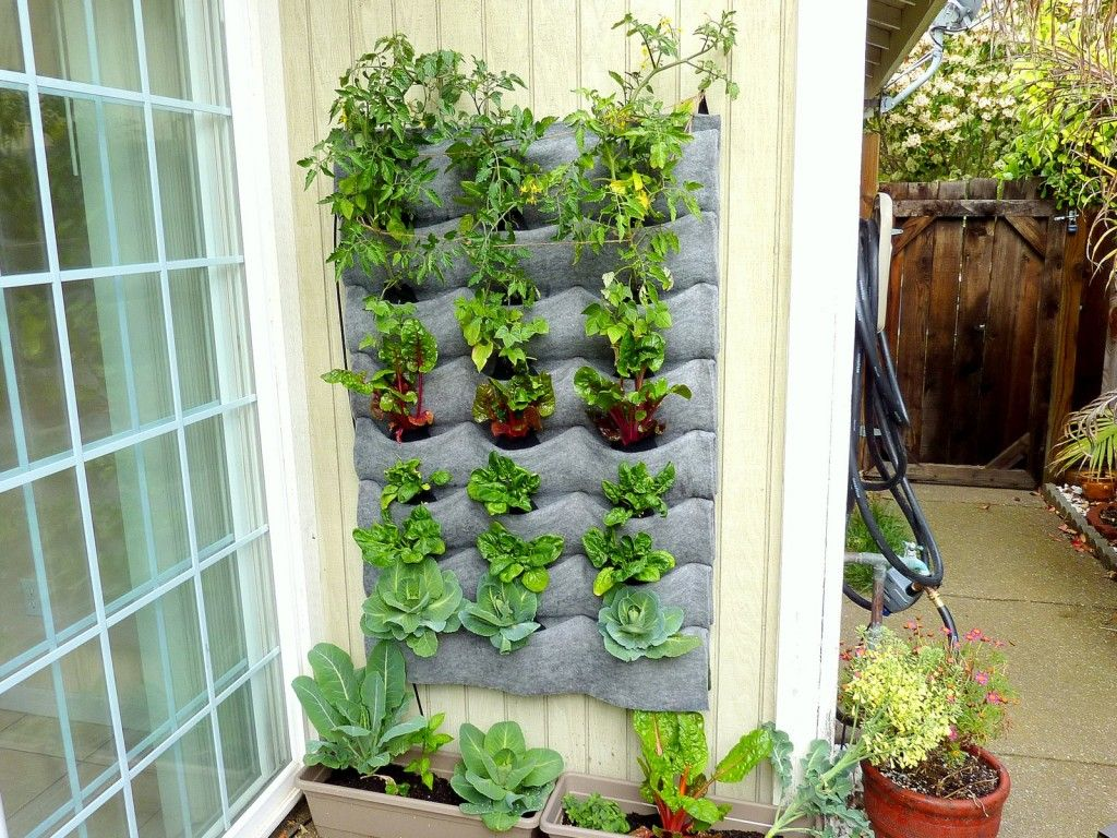 Living Wall Kit With Veggies Planted