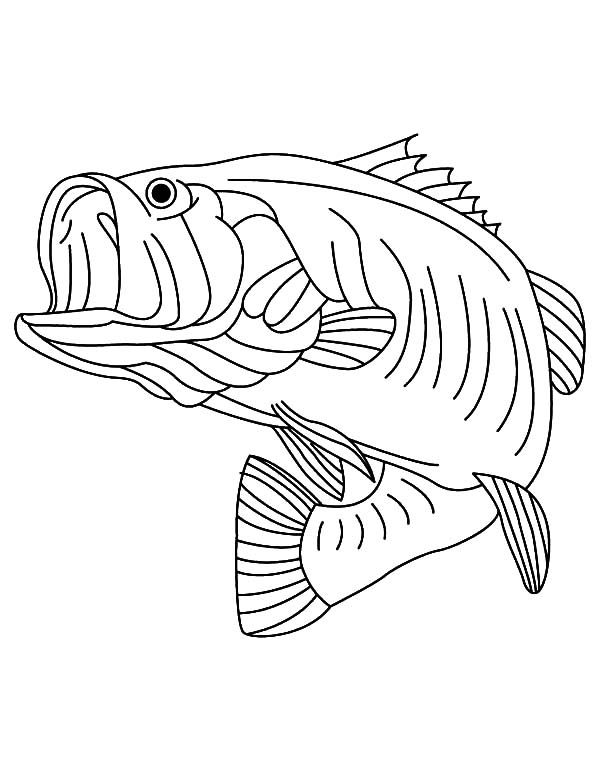 Sea Predator Striped Bass Fish Coloring Pages Fish Coloring Page