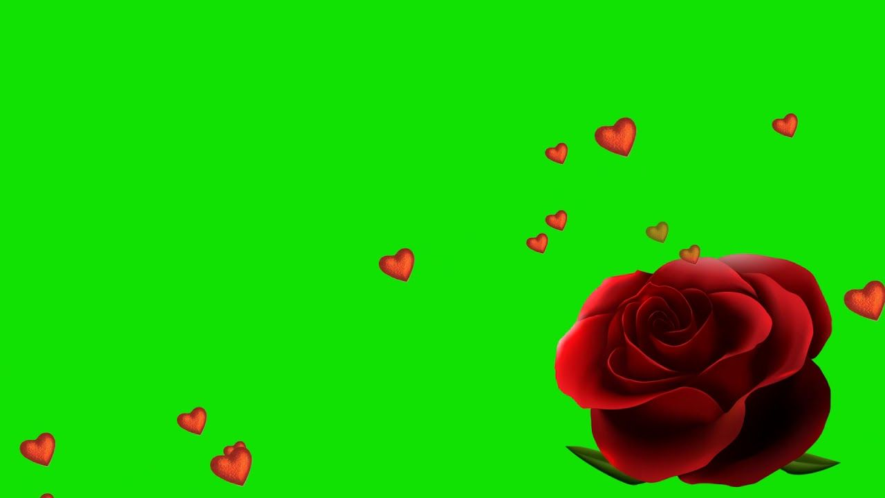 Green Screen Love Effects Flowers Animation Free Download Star Video Eff Green Screen Video Backgrounds Free Video Background Green Background Video