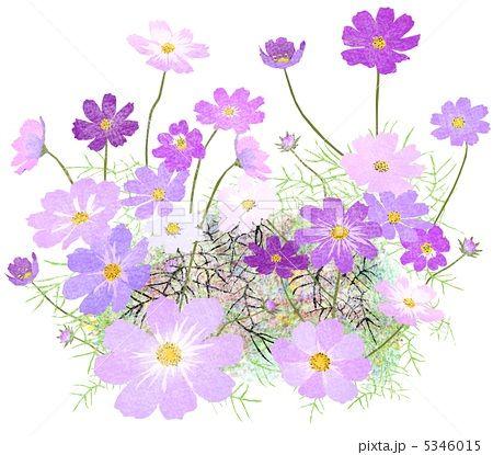 秋の花 イラスト フリー Google 検索 秋の花 Illustrationdyi