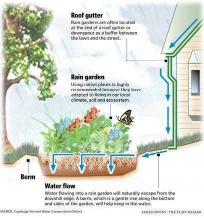 rain garden design for homeowners - Google Search | home ...