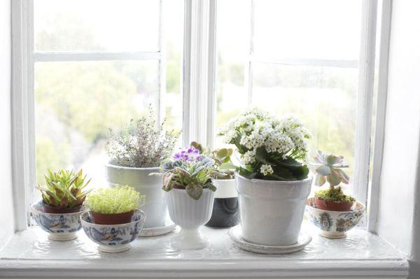 Deko Fensterbank Wohnzimmer ~ Fensterbank deko mit pflanzen die einen kleinen garten erschaffen