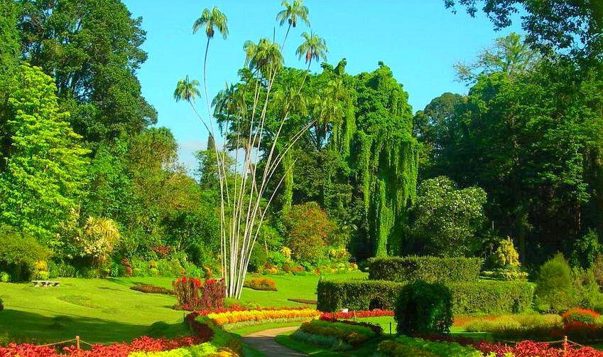 Royal Botanical Gardens Peradeniya Sri Lanka Pinterest Maldives And Asia