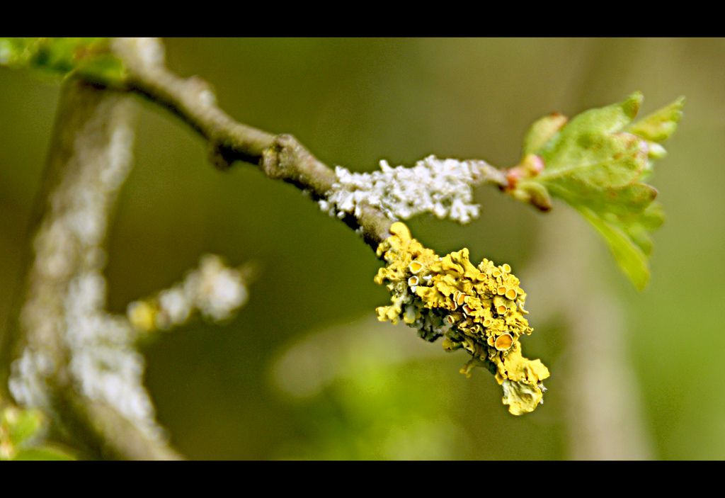 Along the hedgerow | Explore Audrey A Jackson's photos on Fl… | Flickr - Photo Sharing!