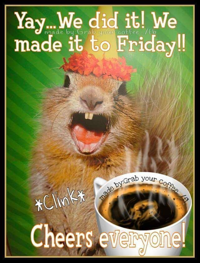Funny Good Friday Meme : Squirrel meme friday coffee quote good morning quotes