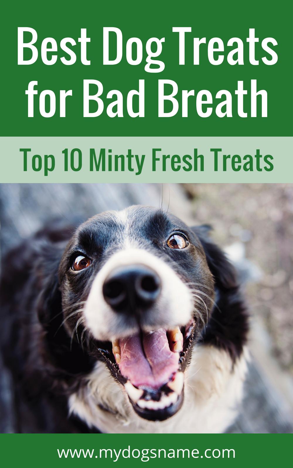 Best Dog Treats For Bad Breath Top 10 Minty Fresh Treats Best