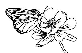 Imagen De Una Mariposa Posada En Una Flor Faciles Para Colorear