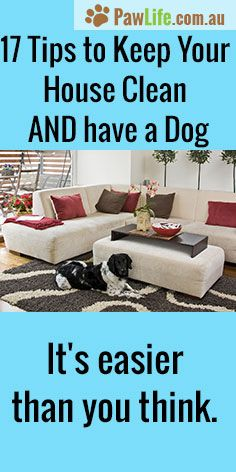 17 Tips to Keep Your House Clean AND have a Dog