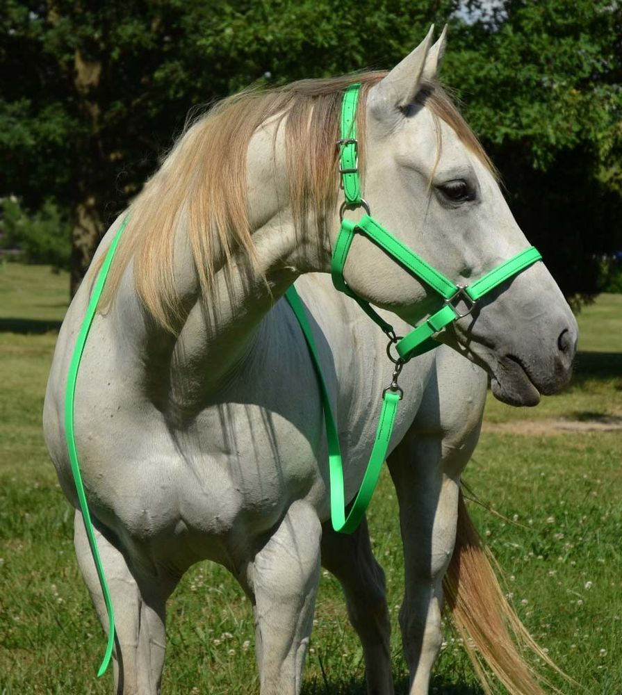 Details about Draft Horse Size ANY COLOR Horse HALTER & LEAD for ...