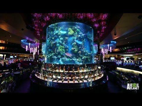 Casino reveal casino deal hotel
