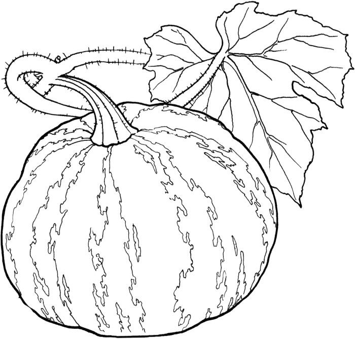 pumpkin and leaves coloring pages - photo#39