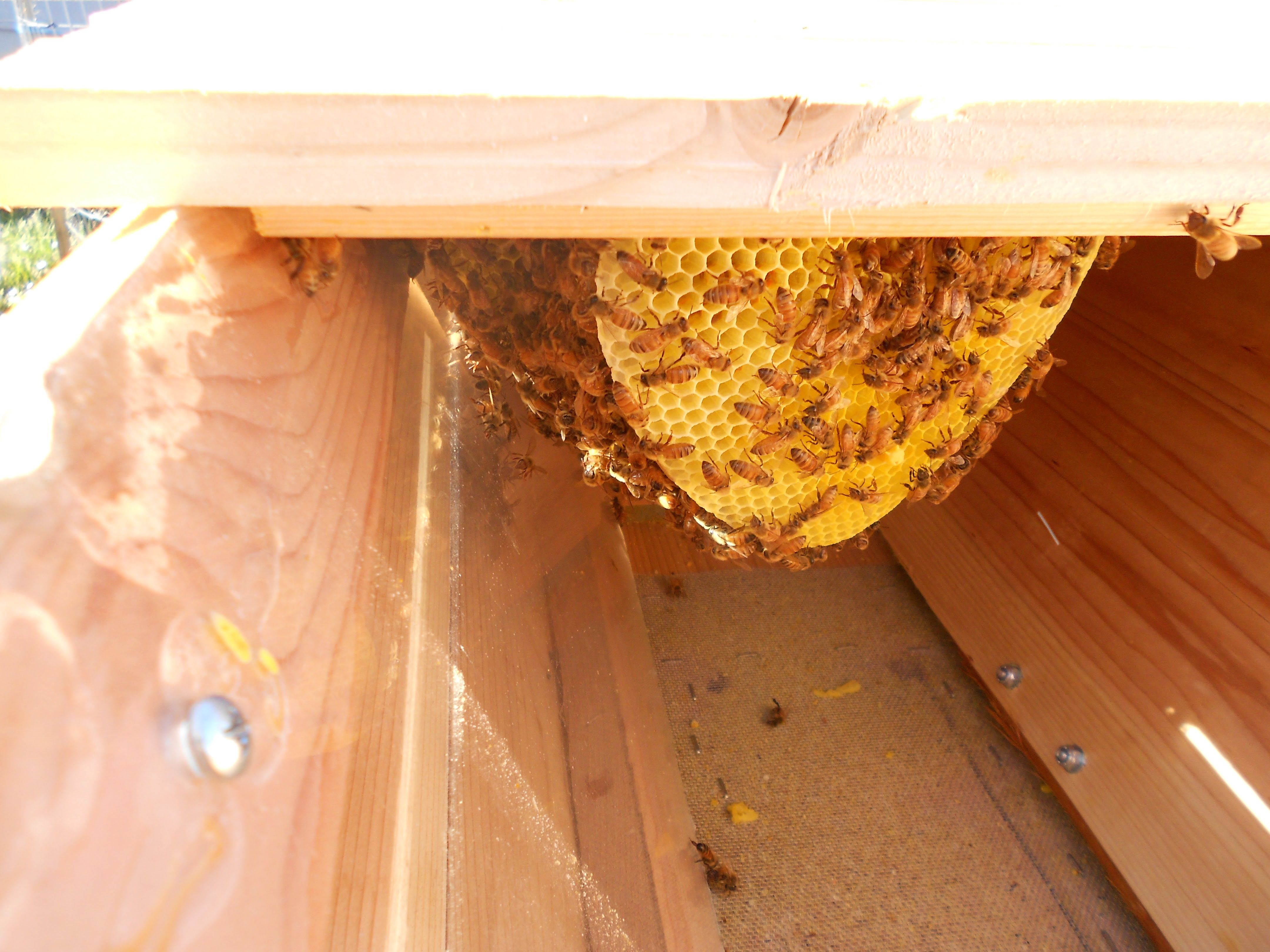 beautiful top bar beehive | Top bar bee hive, Bees for ...