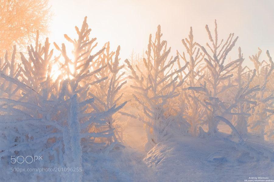 Сквозь деревья. by dubnaphotos via http://ift.tt/2lCAGyS