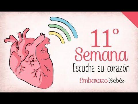 cd4257c04 Semanas de embarazo (1-40) - YouTube