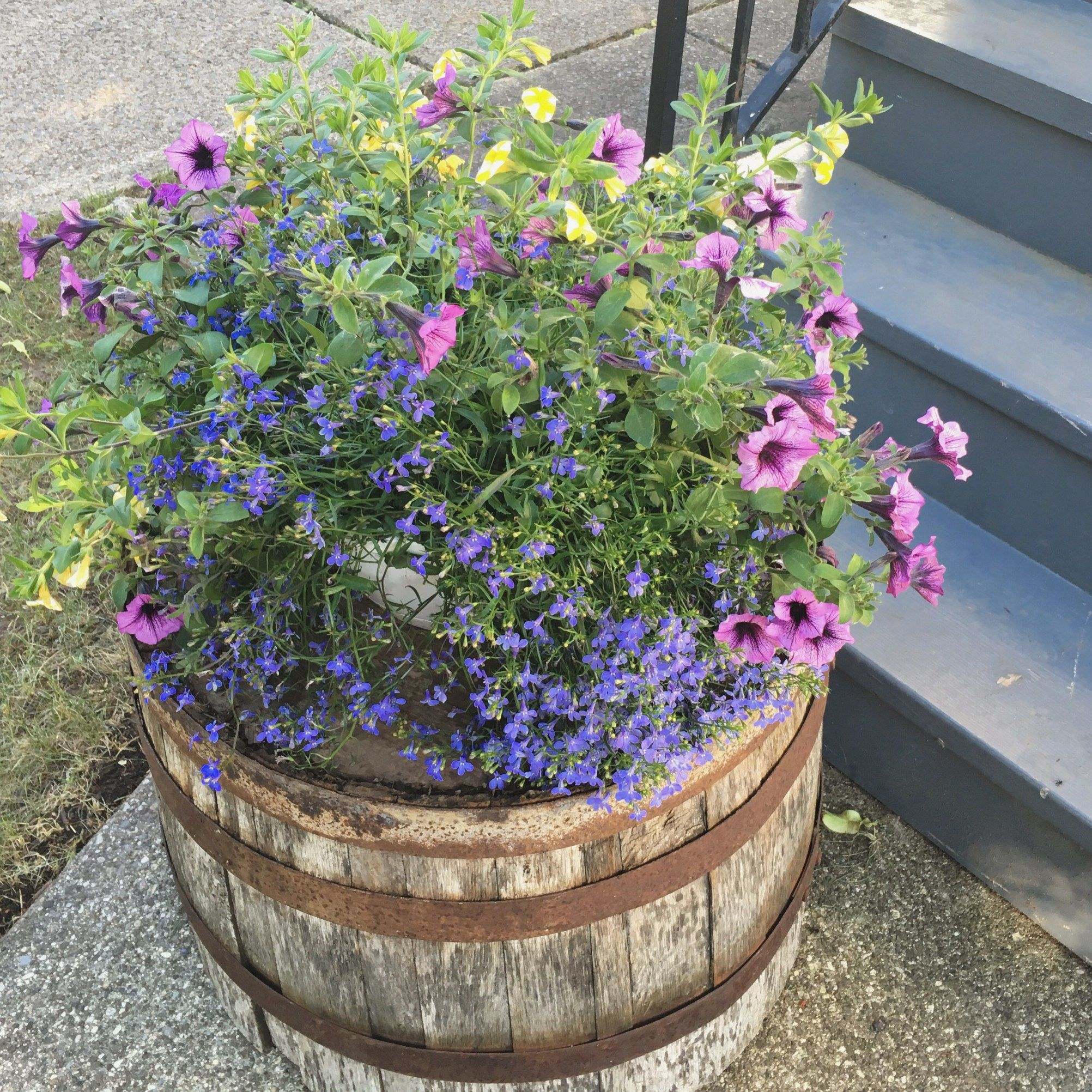 Simple front yard makeover before and after gardening pinterest annual flower arrangement on old whiskey barrel izmirmasajfo